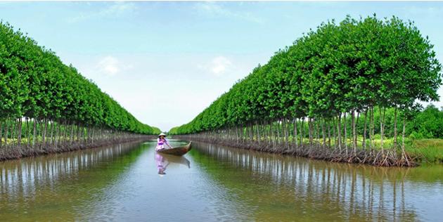 Sinh thái rừng biển Cà Mau